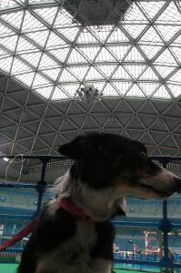 2009-02-14 15わんにゃんドーム 002