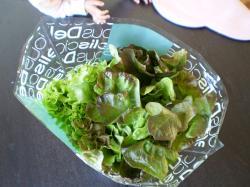 サラダ菜?