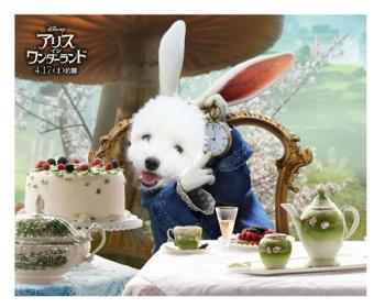Poster_Rabbit4.jpg