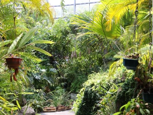 ジャングルエリア大好き!