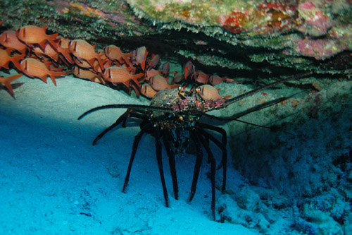 smboatdive 002