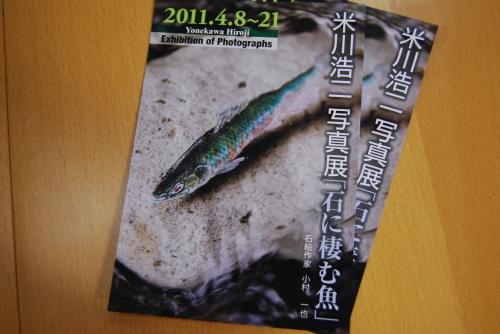 石に棲む魚