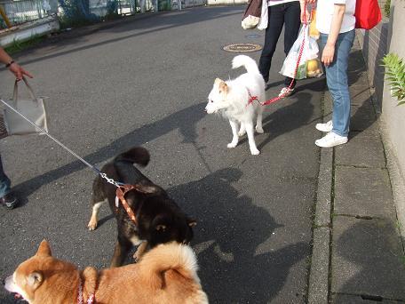 2009_06132009・6・5~13 北海道・犬仲間0161