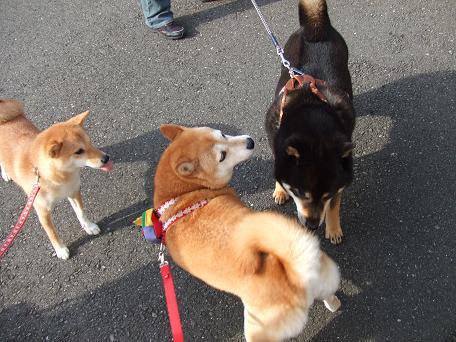 2009_06132009・6・5~13 北海道・犬仲間0162