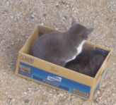 箱入り猫_2