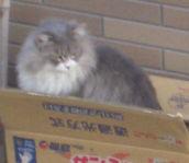 箱入り猫_3