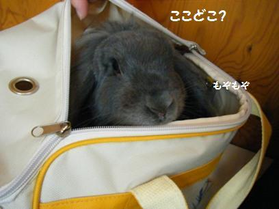 まみちゃんよりデカい花子!