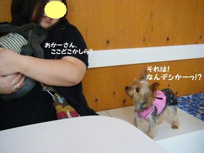 こつぶちゃんにとって花子は何に見えたんだろうか?