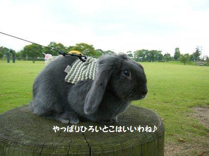 「おとぎの森」にウサギ・・・まさしくメルヘンやないの。