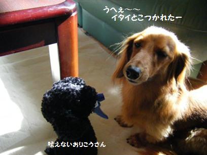 オカンはプードルのこと「ぷーちゃん」って言います。オカンに珍しく可愛い言い方じゃないの。