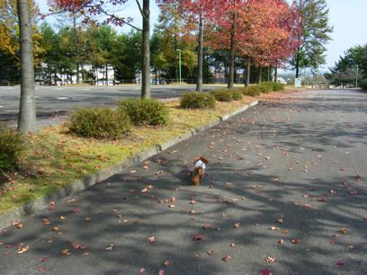 音で季節を楽しむってのも、桃とのお散歩で気が付いたなぁ♪
