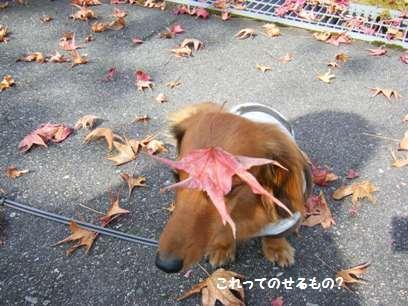 赤い葉っぱって可愛いね~♪
