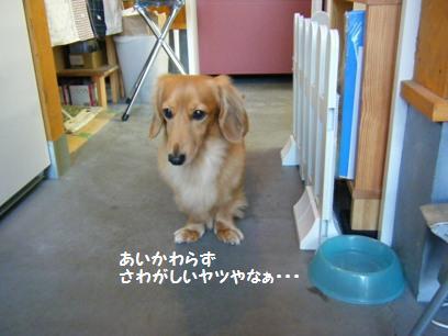 桃がうるさいから困った顔してるjojo店長(^^;)
