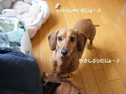 可愛いのんちゃん♪会いたかったじょ!!