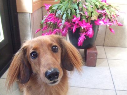 一応犬ブログなので、犬(桃)も画像に入れておかないとね。