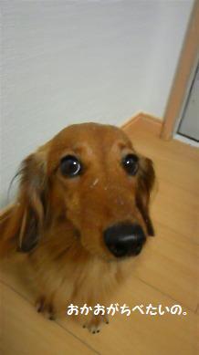 先代犬は雪が好きでパクパク食べながら歩いてたっけ。桃はガタガタ震えるだけさ・・・