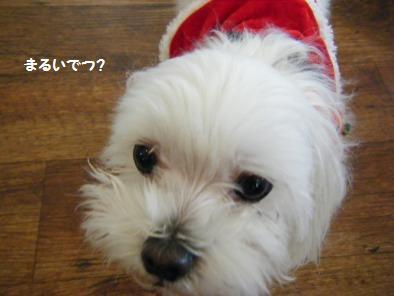 別犬に写った美優ちゃん!でも可愛いぞ!!