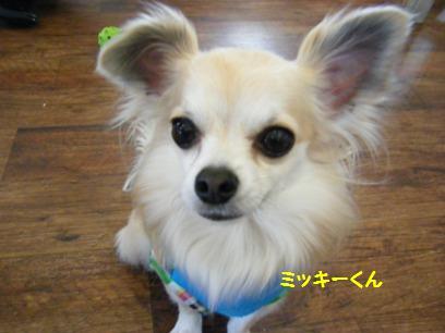 ミッキーくんも桃と同じくオカマだって~(^m^)
