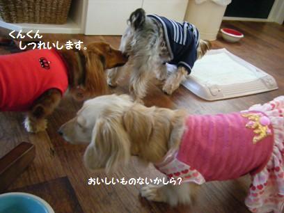 普通に嗅いでもわからないけど、犬の嗅覚では一体どんなニオイがするのかしら?