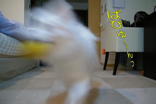 IMGP4642.jpg