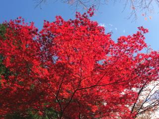 常照寺の紅葉