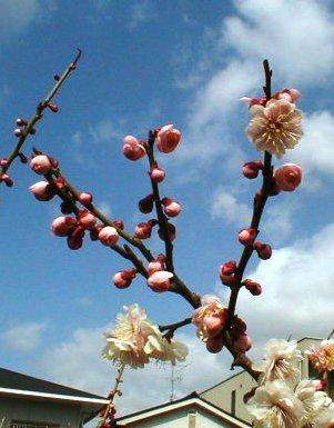 桃かな?2009.2.21