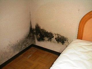 ベッド背面のカビ