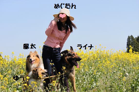 2012434_20120403204440.jpg