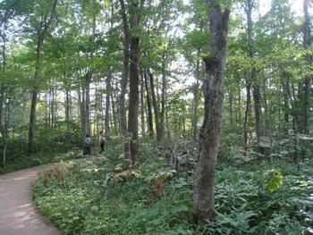 十勝千年の森4