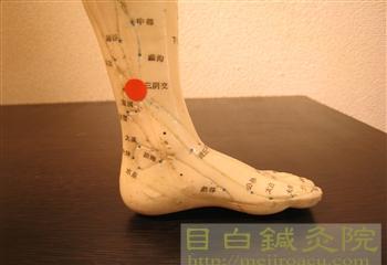 目白鍼灸院ツボ人形生理痛に効くツボ2