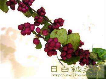 むらさきしきぶによく似た植物
