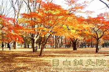都心の紅葉20101127代々木公園1