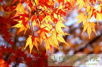 都心の紅葉20101127代々木公園2