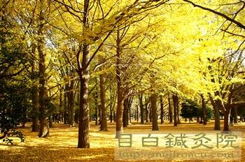 都心の紅葉20101127代々木公園4