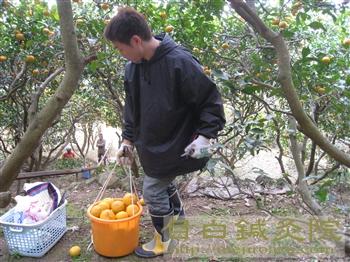 20110206甘夏ミカン草取り4