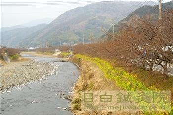20110206河津桜4