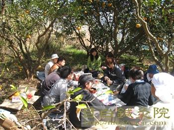 20110306甘夏農作業5