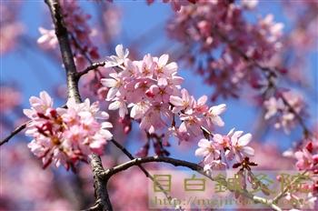 目白庭園20110405(4)