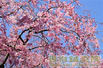 目白庭園20110405(2)