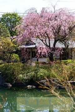 目白庭園20110405(1)