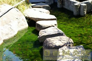 目白庭園20110405(5)