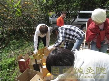 20110504甘夏収穫祭1
