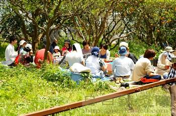 20110504甘夏収穫祭2
