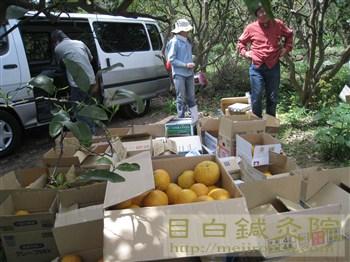 20110504甘夏収穫祭3
