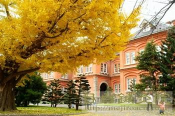 北海道庁イチョウ2010