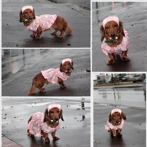 page雨降りでっすっ♪