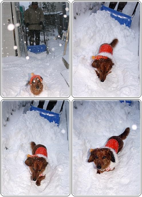 11月29日(月)雪はね出動でっすっ♪