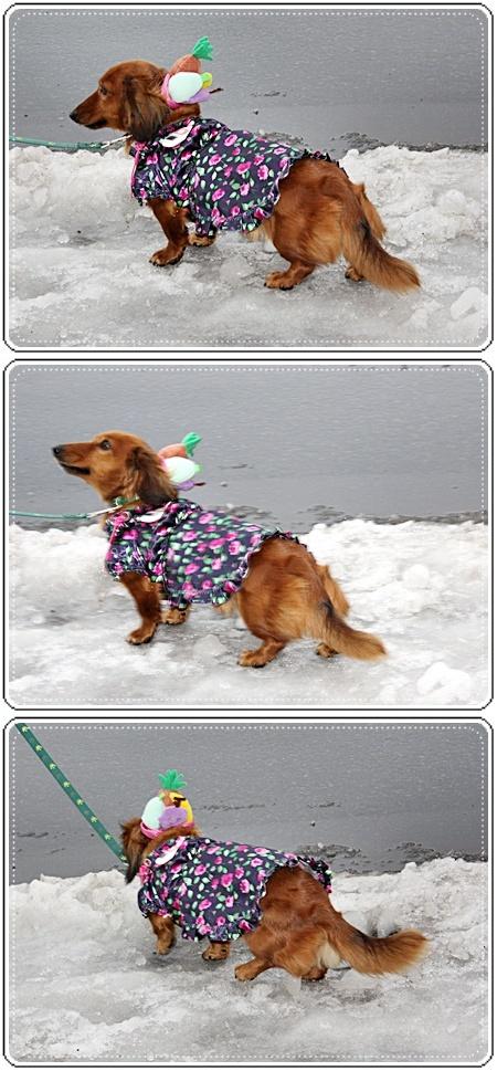 IMG_1102-20101203-vert12月3日(金)氷みたいに滑りますっ♪