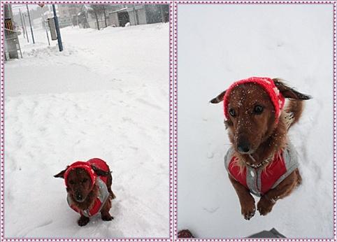 12月18(土)粉雪降ってますっ♪