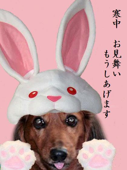 WAN MUSIC うさちゃん変身企画(2010.11.1)